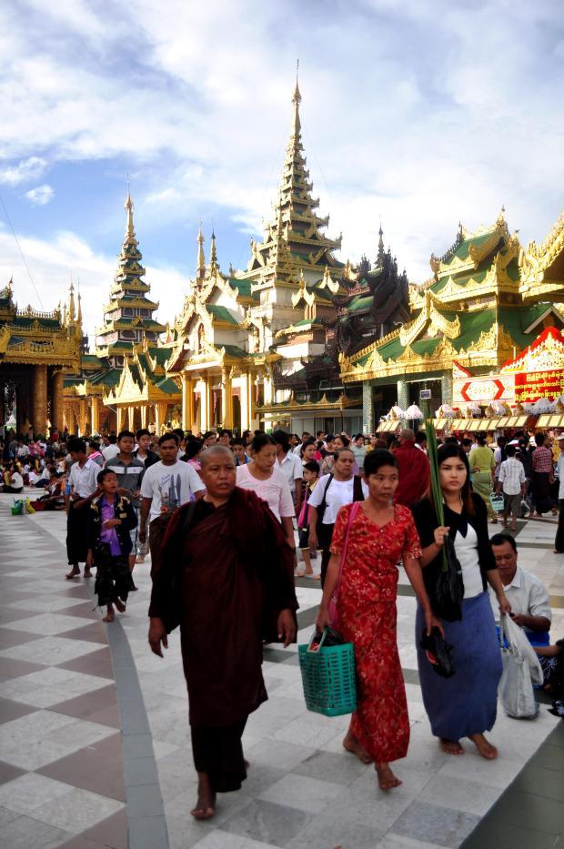 Pagoda Morning